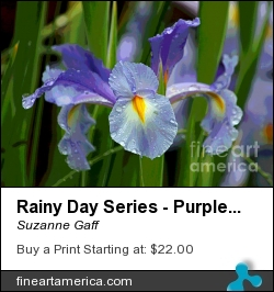 Rainy Day Series - Purple Iris II by Suzanne Gaff - Photograph - Photograph, Giclee Print, Canvas Print, Greeting Card, Poster, Fine Art Print