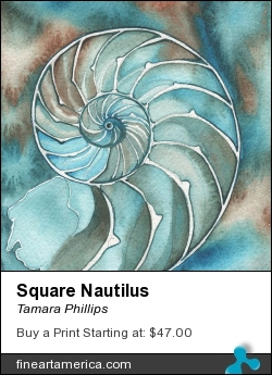 Square Nautilus by Tamara Phillips - Painting - Watercolour