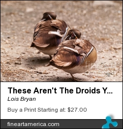 These Aren't The Droids You're Looking For by Lois Bryan - Photograph