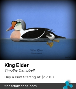 King Eider by Timothy Campbell - Painting - Acrylic On Masonite