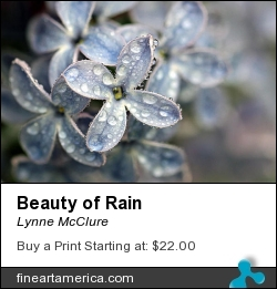 Beauty Of Rain by Lynne McClure - Photograph - Photography