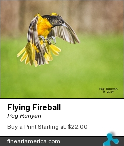 Flying Fireball by Peg Runyan - Photograph