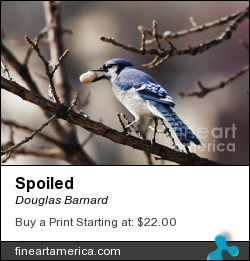 Spoiled by Douglas Barnard - Photograph - Digitally Enhanced Photographs