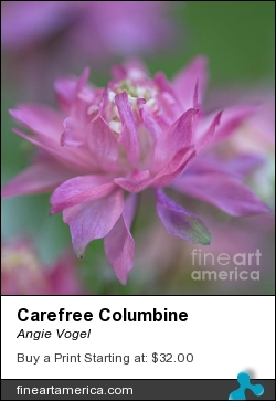 Carefree Columbine by Angie Vogel - Photograph - Photography / Photograph