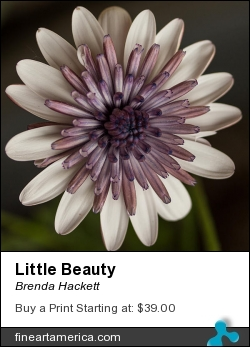 Little Beauty by Brenda Hackett - Photograph - Photography