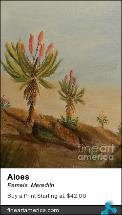 Aloes by Pamela  Meredith - Painting - Soft Pastels On Pastel Paper
