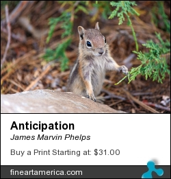 Anticipation by James Marvin Phelps - Photograph - Digital Photography