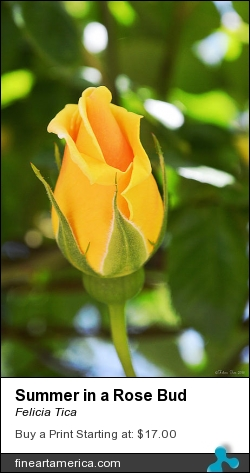 Summer In A Rose Bud by Felicia Tica - Photograph - Photography