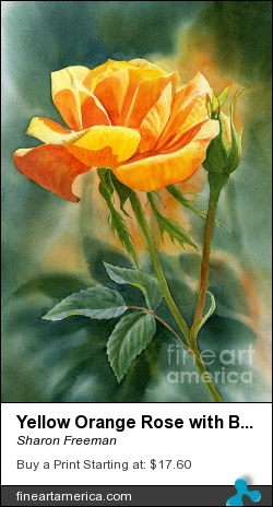 Yellow Orange Rose With Background by Sharon Freeman - Painting - Watercolor On Paper