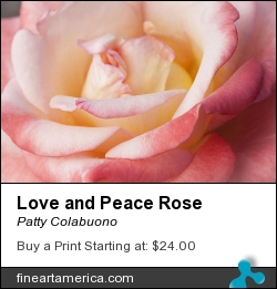 Love And Peace Rose by Patty Colabuono - Photograph - Photography