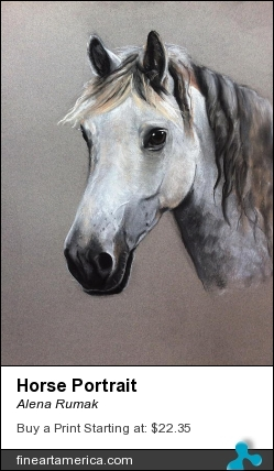 Horse Portrait by Alena Rumak - Drawing - Pastel