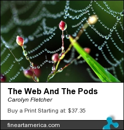 The Web And The Pods by Carolyn Fletcher - Photograph - Photography