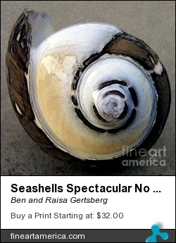 Seashells Spectacular No 3 by Ben and Raisa Gertsberg - Photograph - Digital Art