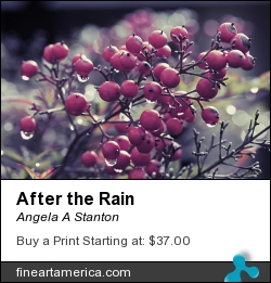 After The Rain by Angela A Stanton - Photograph - Photograph