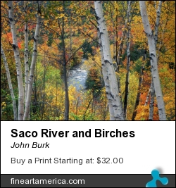 Saco River And Birches by John Burk - Photograph