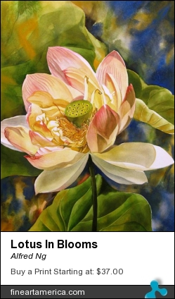 Lotus In Blooms by Alfred Ng - Painting - Watercolour On Paper