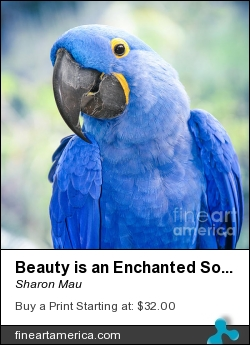 Beauty Is An Enchanted Soul by Sharon Mau - Photograph - Photograph Fine Art Photography