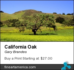 California Oak by Gary Brandes - Photograph - Photography