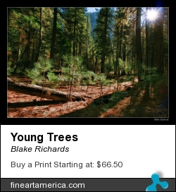 Young Trees by Blake Richards - Photograph - Photography