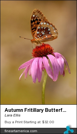 Autumn Fritillary Butterfly by Lara Ellis - Photograph