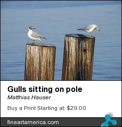 Gulls Sitting On Pole by Matthias Hauser - Photograph - Photograph