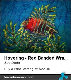 Hovering - Red Banded Wrasse by Sue Duda - Painting - Painting - Batik On Silk