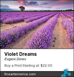 Violet Dreams by Evgeni Dinev - Photograph