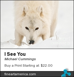 I See You by Michael Cummings - Photograph - Photograph