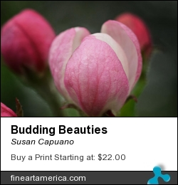Budding Beauties by Susan Capuano - Photograph - Photography