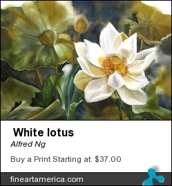 White Lotus by Alfred Ng - Painting - Watercolour On Paper
