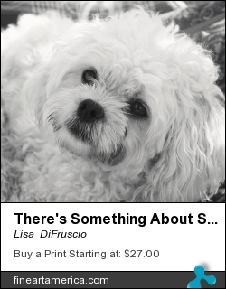 There's Something About Sophia by Lisa  DiFruscio - Photograph - Photograph