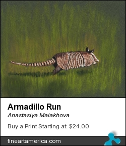 Armadillo Run by Anastasiya Malakhova - pastels on paper