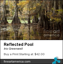 Reflected Pool by Iris Greenwell - Photograph - Photography