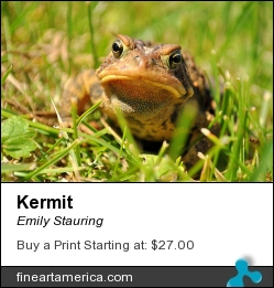 Kermit by Emily Stauring - Photograph - Photograph