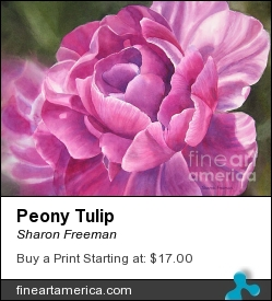 Peony Tulip by Sharon Freeman - Painting - Watercolor On Paper