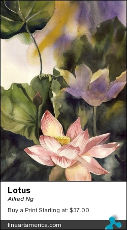 Lotus by Alfred Ng - Painting - Watercolor On Paper