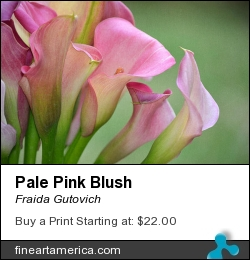 Pale Pink Blush by Fraida Gutovich - Photograph - Photography W/texture