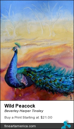 Wild Peacock by Beverley Harper Tinsley - Painting - Watercolor And Graphite