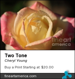 Two Tone by Cheryl Young - Photograph - Photography,digital Art,digital Editing