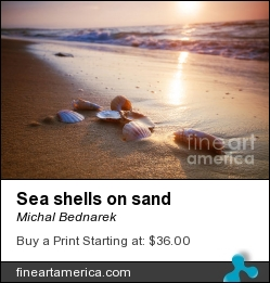 Sea Shells On Sand by Michal Bednarek - Photograph