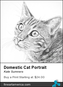 Domestic Cat Portrait by Kate Sumners - Drawing - Charcoal