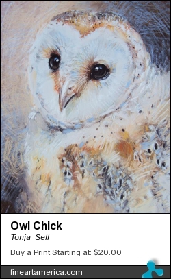 Owl Chick by Tonja  Sell - Pastel - Pastel Drawing On Paper
