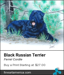 Black Russian Terrier by Ferrel Cordle - Painting - Watercolor