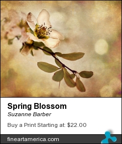 Spring Blossom by Suzanne Barber - Photograph - Photograph