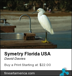Symetry Florida Usa by David Davies - Photograph - Film