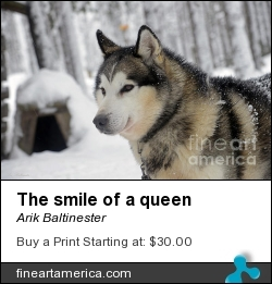 The Smile Of A Queen by Arik Baltinester - Photograph - Photo Print