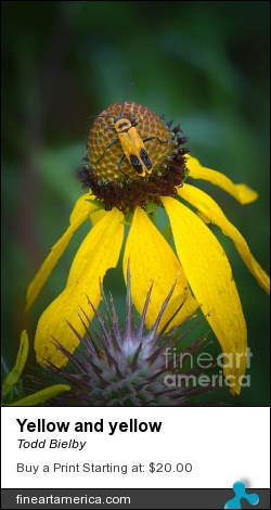 Yellow And Yellow by Todd Bielby - Photograph - Photography
