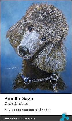 Poodle Gaze by Enzie Shahmiri - Painting - Oil On Panel