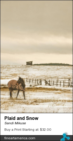 Plaid And Snow by Sandi Mikuse - Photograph - Photograph