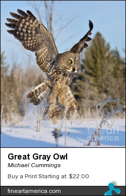 Great Gray Owl by Michael Cummings - Photograph - Photograph